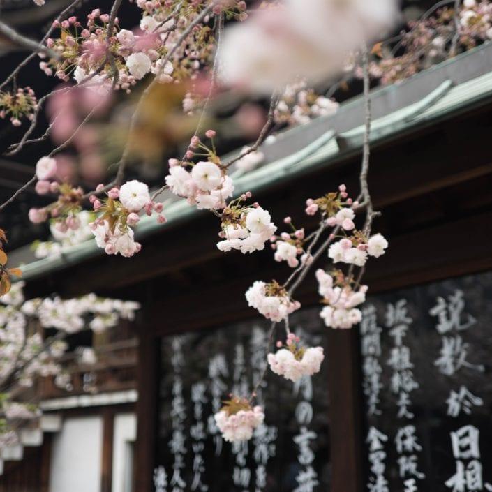Entre blossom et tradition
